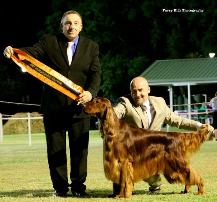 National Dog Show Winning Breeds